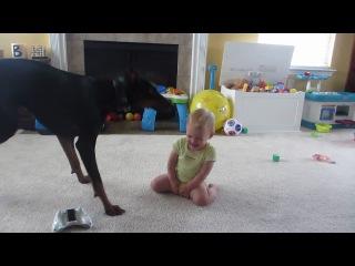 Малыш и доберман играют